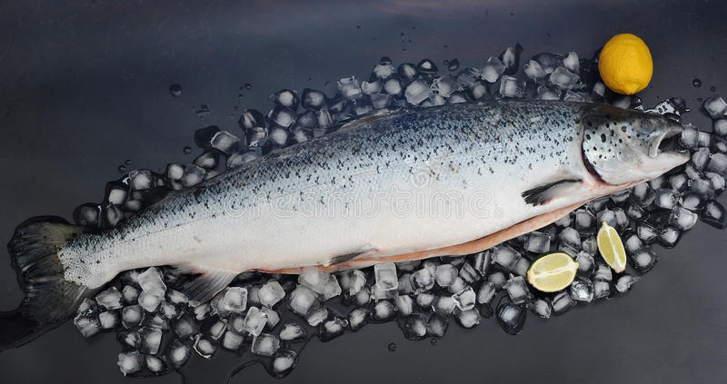Entero de color salmón crudo destripado en el hielo imagenes de archivo