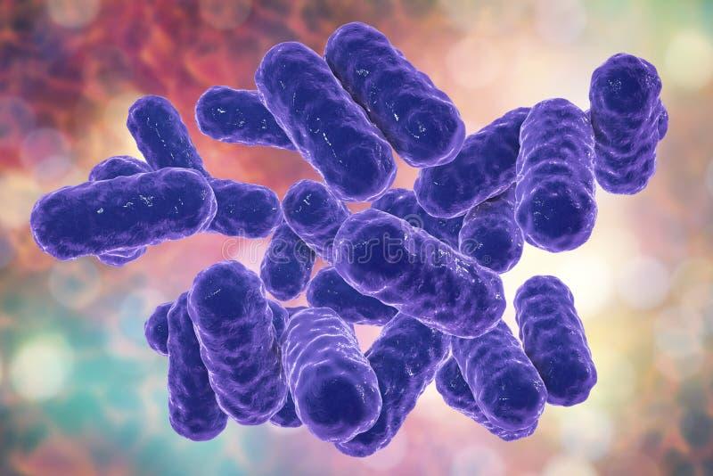 Enterobacteren bakterier, gram-negation stång-formade bakterier royaltyfri illustrationer