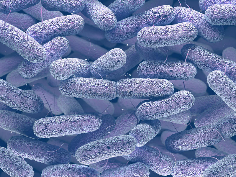 Enterobacteriaceae Bacteriënfamilie stock foto's