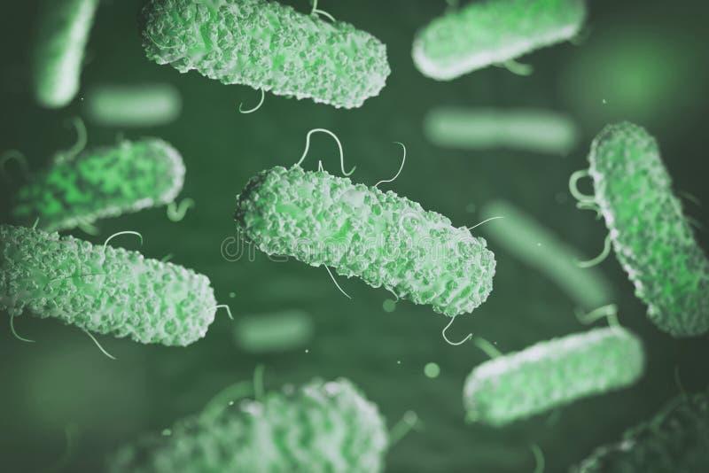 Enterobacterias Bacterias gramnégatifs Escherichia coli illustration libre de droits