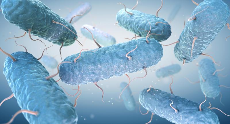 Enterobacterias Las enterobacteriáceas son una familia grande de bacterias gramnegativas stock de ilustración