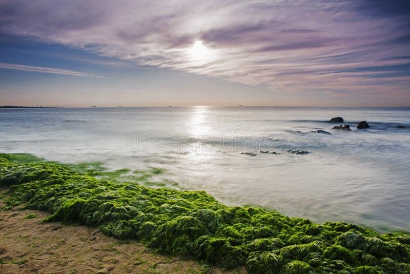 Enteromorpha侵蚀海岸 库存图片