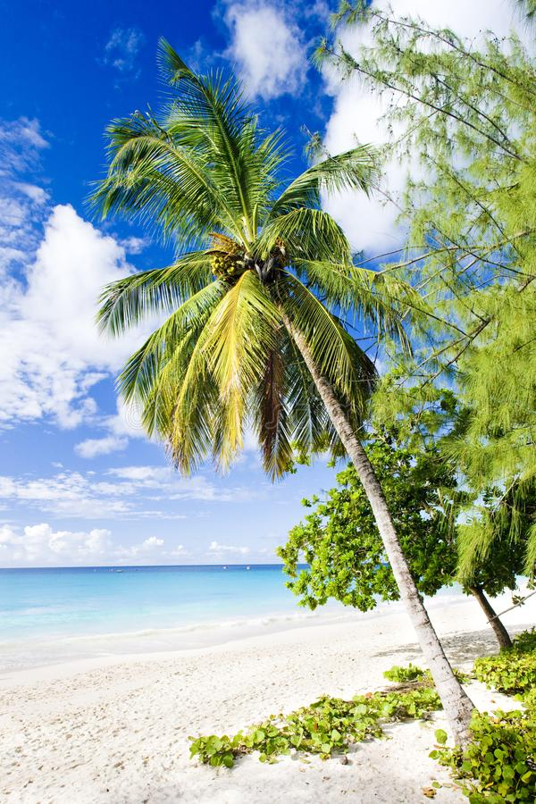 Enterprise Beach, Barbados, Caribbean. Outdoor, outdoors, outside, exterior, exteriors, america, central, greater, antilles, lesser, west, indies, windward royalty free stock image