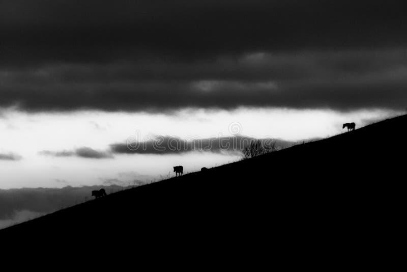 Entfernte Pferdeschattenbilder über Berge gegen einen schönen Himmel an der Dämmerung lizenzfreies stockbild