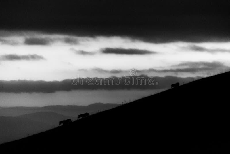 Entfernte Pferdeschattenbilder über Berge gegen einen schönen Himmel an der Dämmerung lizenzfreie stockbilder