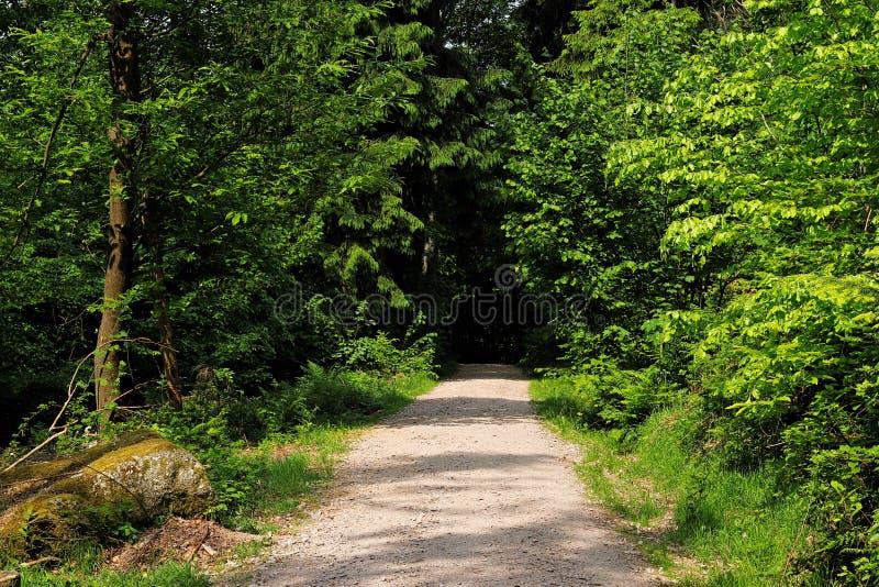 Entlang einem Weg im Schwarzwald wandern, Deutschland stockfoto