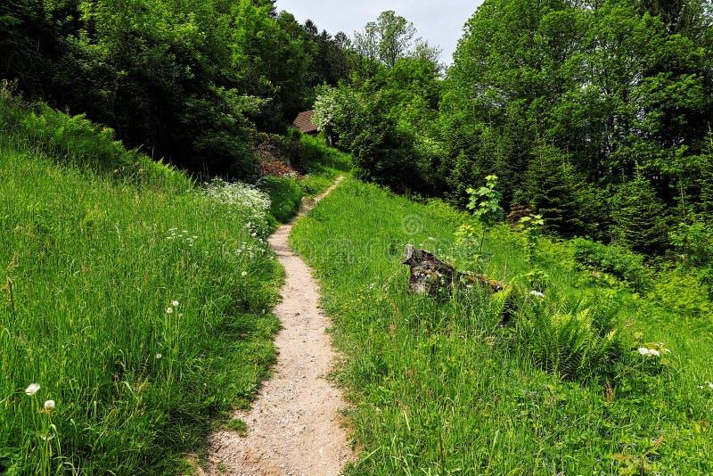 Entlang einem Weg im Schwarzwald wandern, Deutschland stockfotos