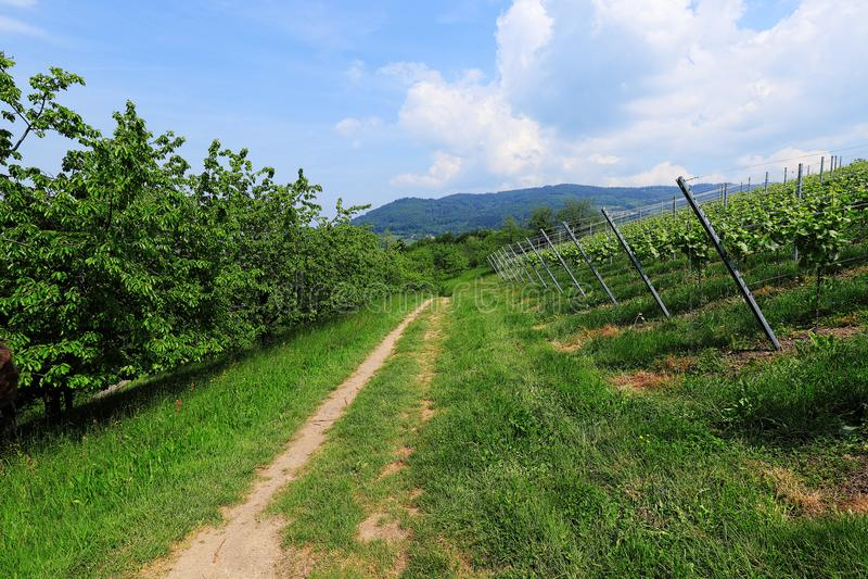 Entlang einem Weg im Schwarzwald wandern, Deutschland lizenzfreies stockfoto
