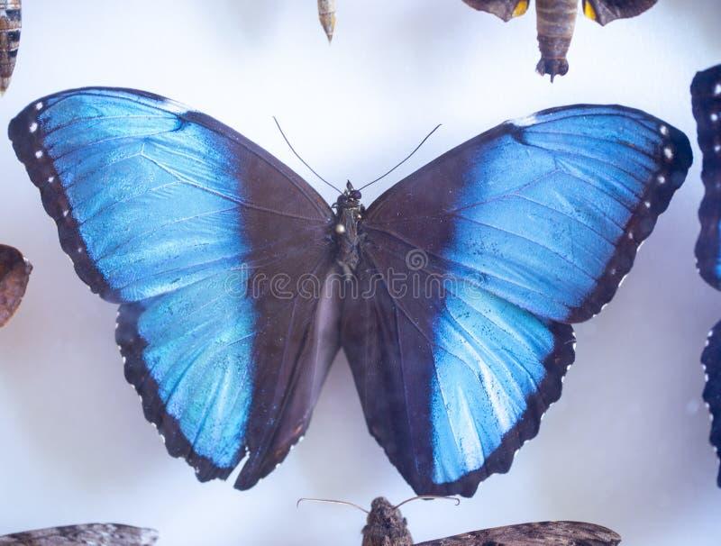 Entomología colección de mariposas tropicales para estudiar entomología científica fotografía de archivo