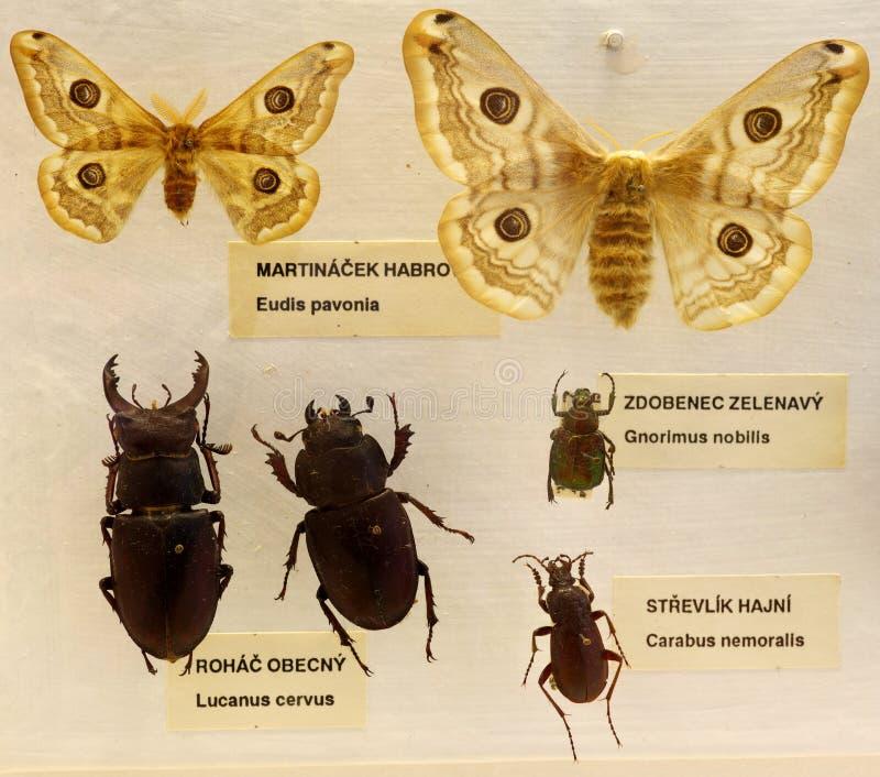 Entomologia set obraz royalty free