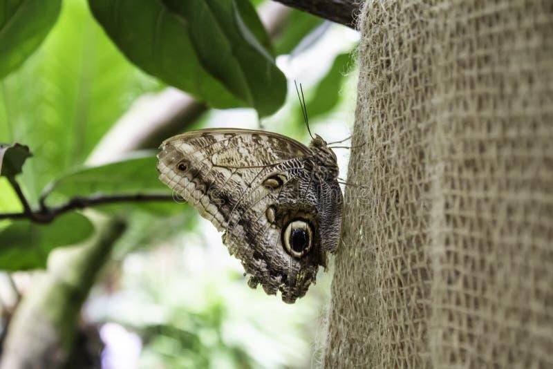 Entomologie des papillons photos stock