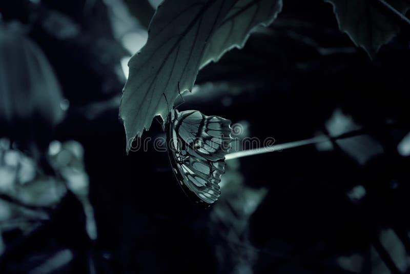Entomologie des papillons images libres de droits