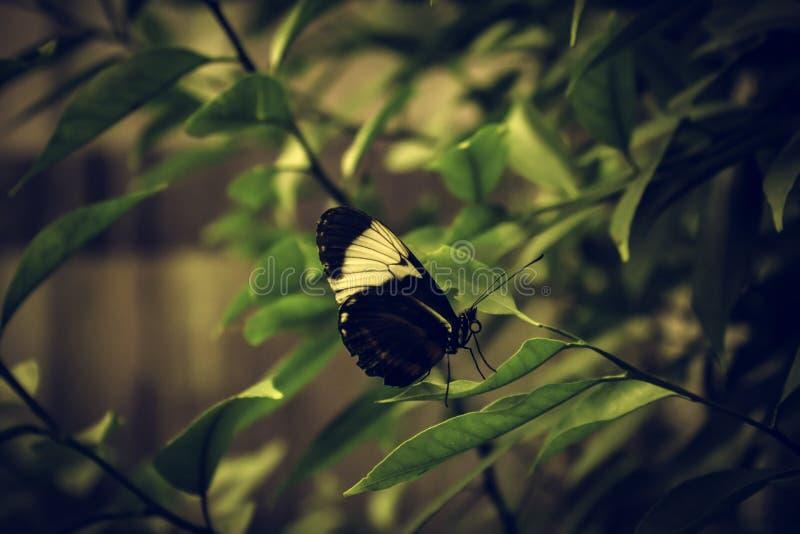 Entomologie des papillons photos libres de droits