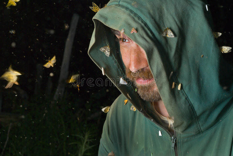 Entomologo 6 fotografie stock libere da diritti
