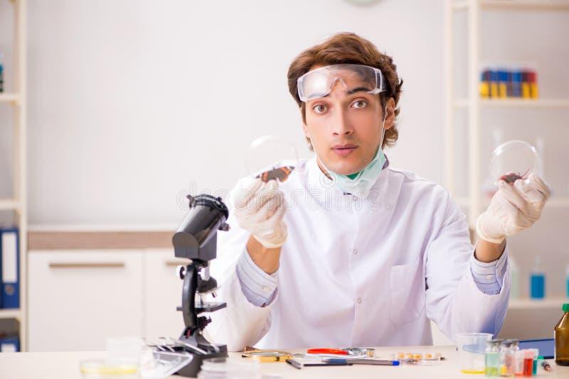 Entomologo maschio che lavora nel laboratorio sulle nuove specie fotografia stock libera da diritti