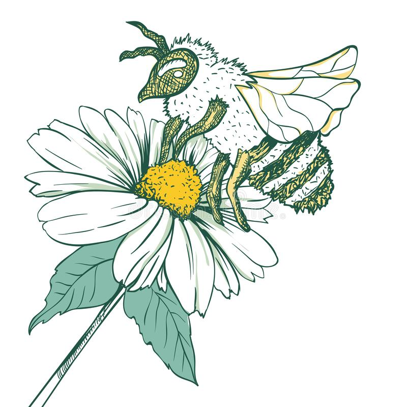 Free Entomology Sketch Illustration With Bee Or Wasp And Camomile Flower. Blossoming And Pollination. Botanical Or Medical Stock Photography - 141838062