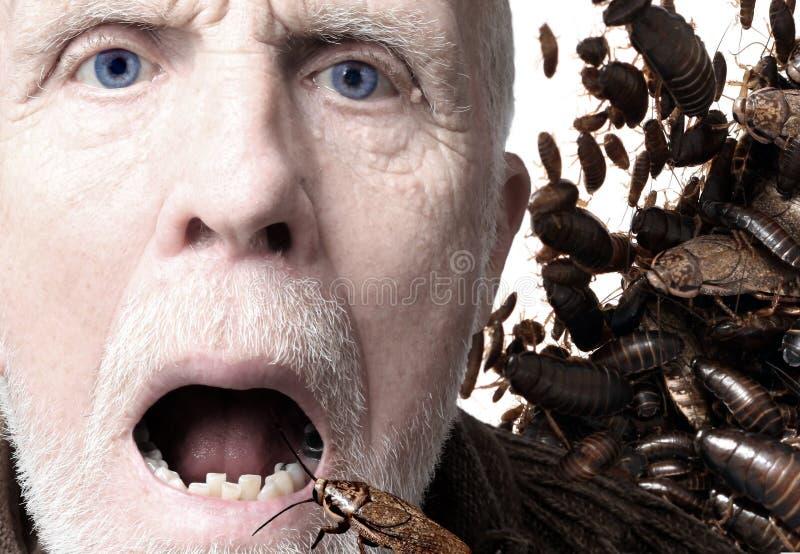Entomophagy, insekty jako jedzenie fotografia stock