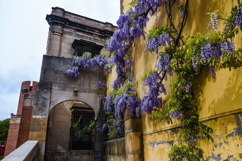 Entrée dans le vieux pavillon public sur la montagne Montjuic Barcelone Espagne Décor de fleurs de glycine sur le mur jaune images libres de droits