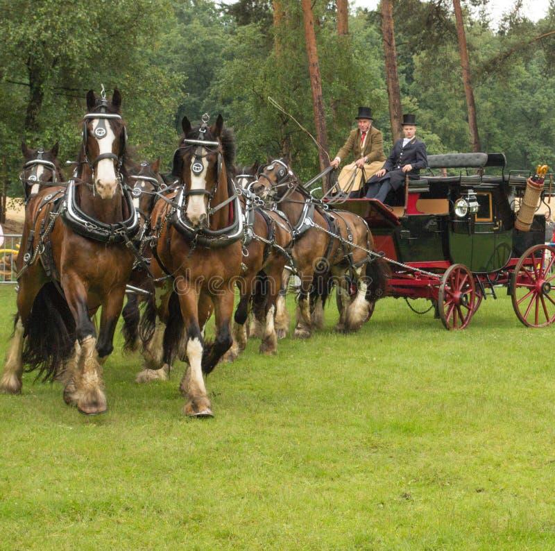 Entraîneur tiré par 8 chevaux de Shire photos libres de droits