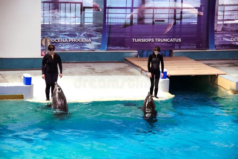 Entraîneurs avec des dauphins en exposition de Dolphinarium images stock