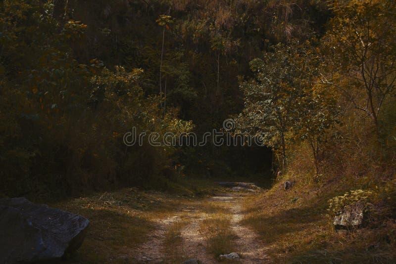 Entrace w głębokim lesie fotografia stock