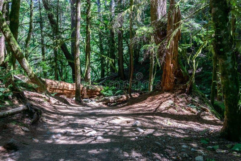 Entrada à floresta no Columbia Britânica provincial principal Canadá do parque de Stawamus imagens de stock
