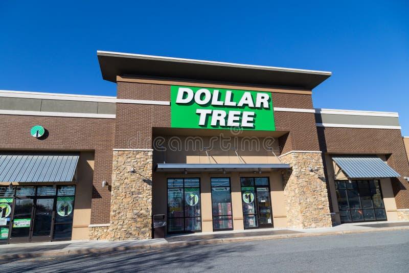 Entrada da árvore do dólar imagens de stock royalty free