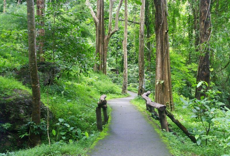 Entrada da estrada à floresta imagem de stock