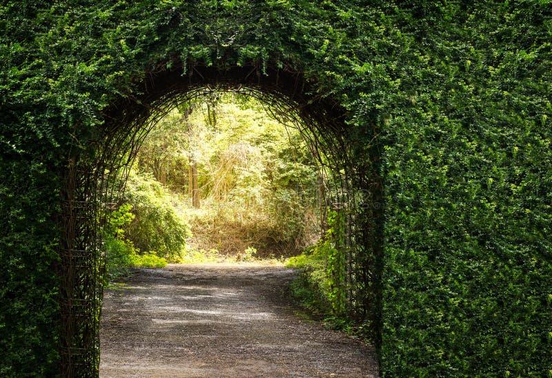 Entrada da porta do arco da árvore foto de stock royalty free