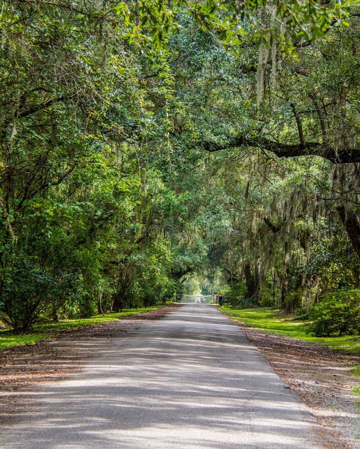 Entrada Live Oaks da plantação fotos de stock royalty free