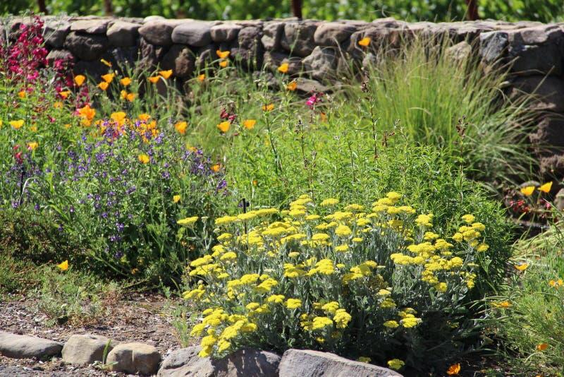 Entrada a un camino del condado en Napa Valley con las flores imágenes de archivo libres de regalías