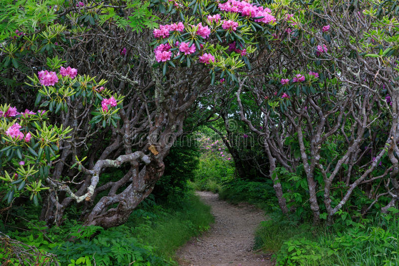 Entrance Craggy Garden Pinnacle Trail North Carolina stock photos