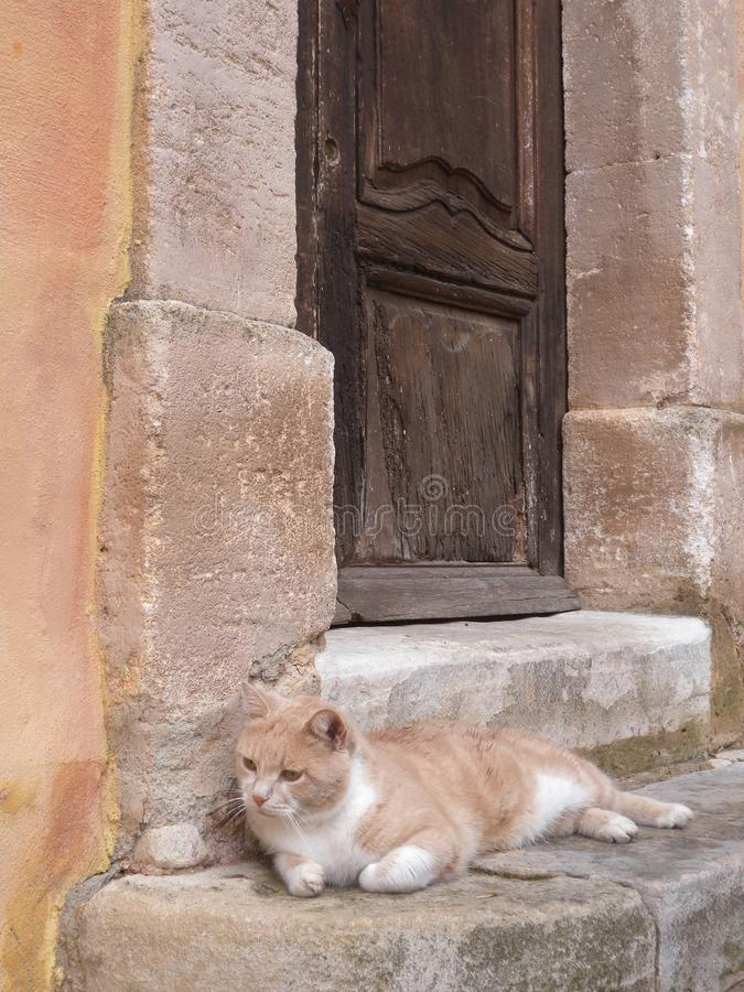 Entrance old door wood with lying cat at Roussillon Village Provence France royalty free stock images