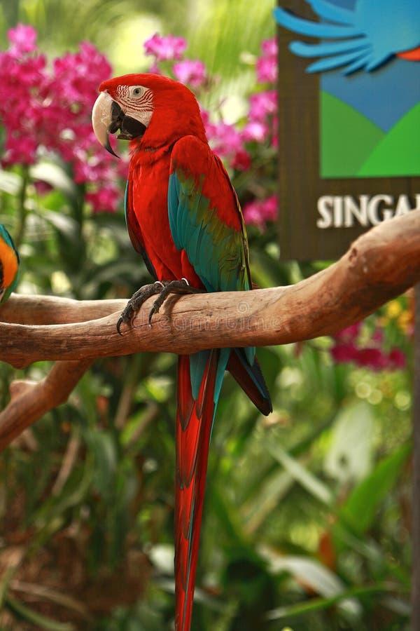 Entrance of the Singapore Bird Park stock photos