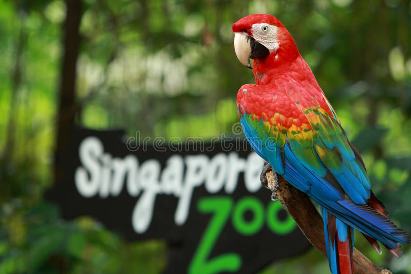 Entrance of the Singapore Zoo. One beautiful parrots stand at entrance of the Singapore zoo for welcome