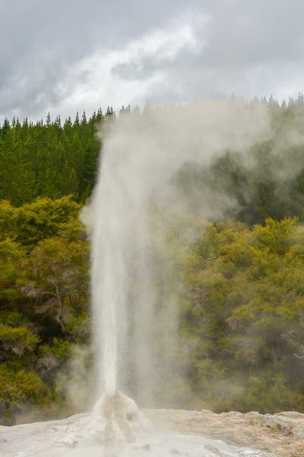 Entrando em erupção a senhora Gnox Geyser no país das maravilhas térmico de Wai-O-Tapu estacione fotos de stock royalty free
