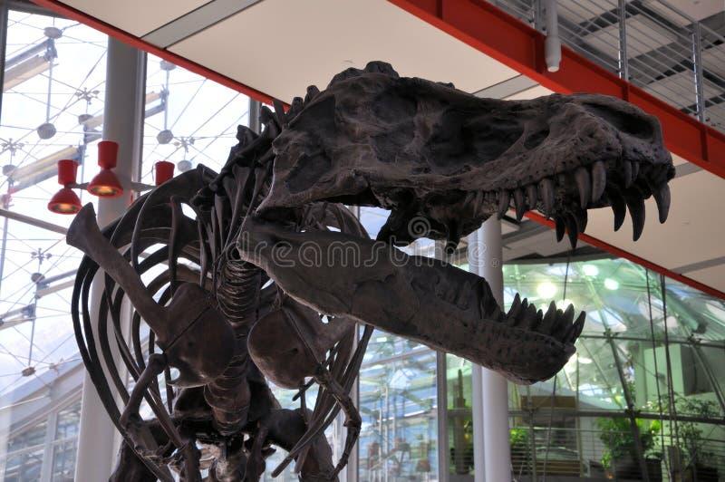 Entrata del museo di T-Rex immagini stock