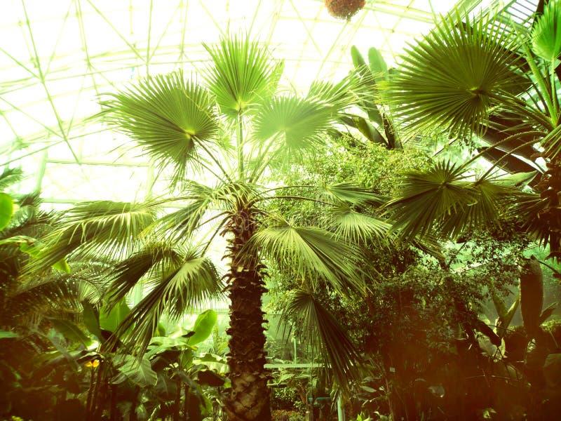 Entre as palmeiras Paraíso verde fotografia de stock royalty free