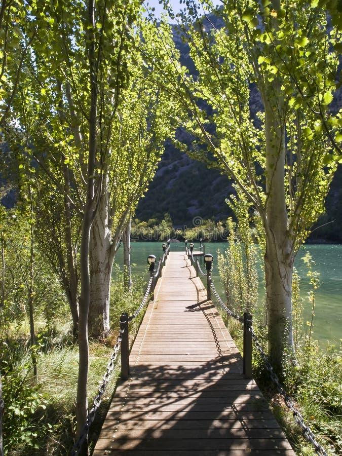 Entre em um lago entre árvores imagem de stock royalty free