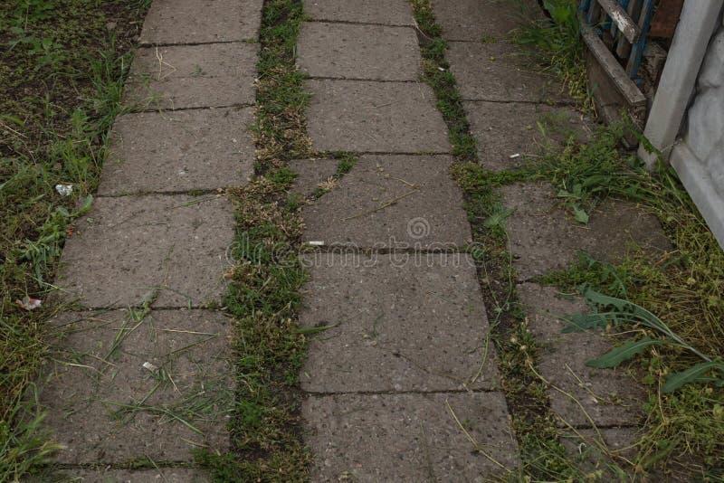 Entre les coutures des vieux pavés concrets a poussé l'herbe image libre de droits