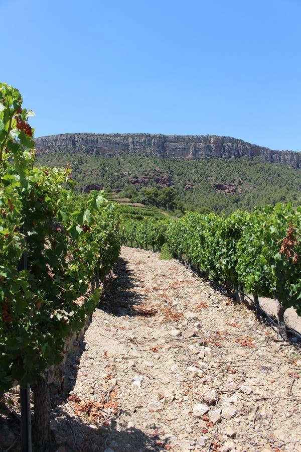 Entre les rangées de raisin sur une colline dans Priorat Espagne photographie stock libre de droits