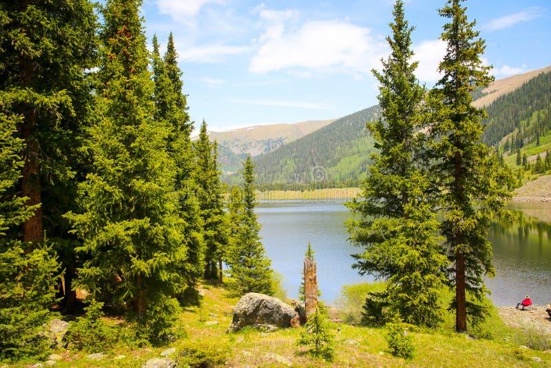 Entre los árboles del lago mirror en el paso de Tincup, Colorado, los E.E.U.U. imagen de archivo