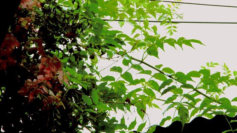 Entre los cables negros y las ramas verdes foto de archivo