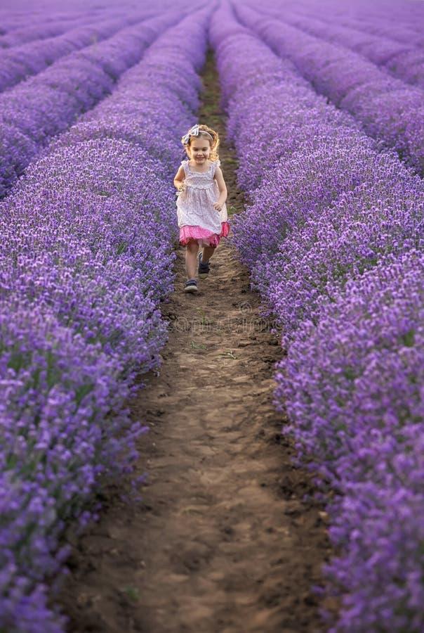Entre os campos da alfazema fotografia de stock royalty free