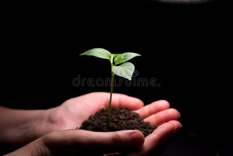 Entrega a planta das terras arrendadas imagem de stock