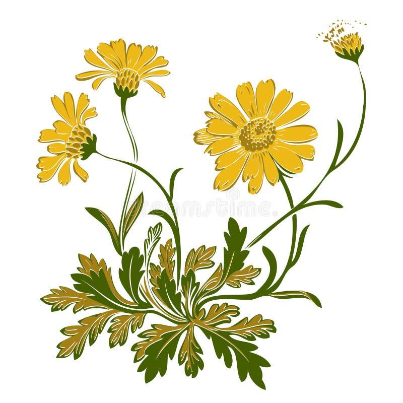 Entregue as flores tiradas do dente-de-leão isoladas no fundo branco Vetor ilustração do vetor