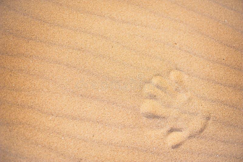 Entregue a cópia na areia de uma praia fotos de stock
