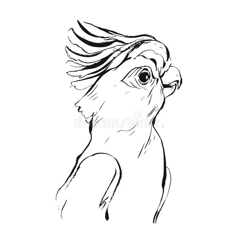 Entregue a desenho de escova tirado do vetor a tinta gráfica esboço tropical realístico do papagaio isolado no fundo branco Proje ilustração stock