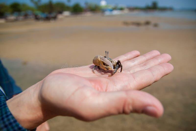 Entregue guardar o caranguejo que esconde no shell no fundo da areia fotografia de stock