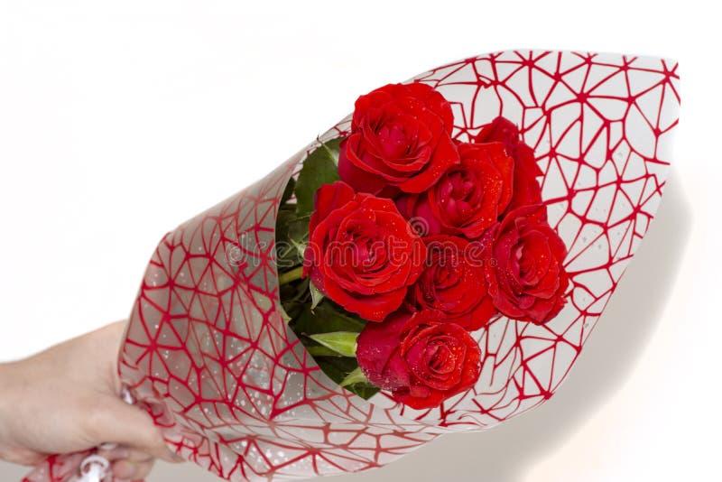 Entregue guardar o ramalhete de rosas vermelhas sobre o fundo branco imagem de stock